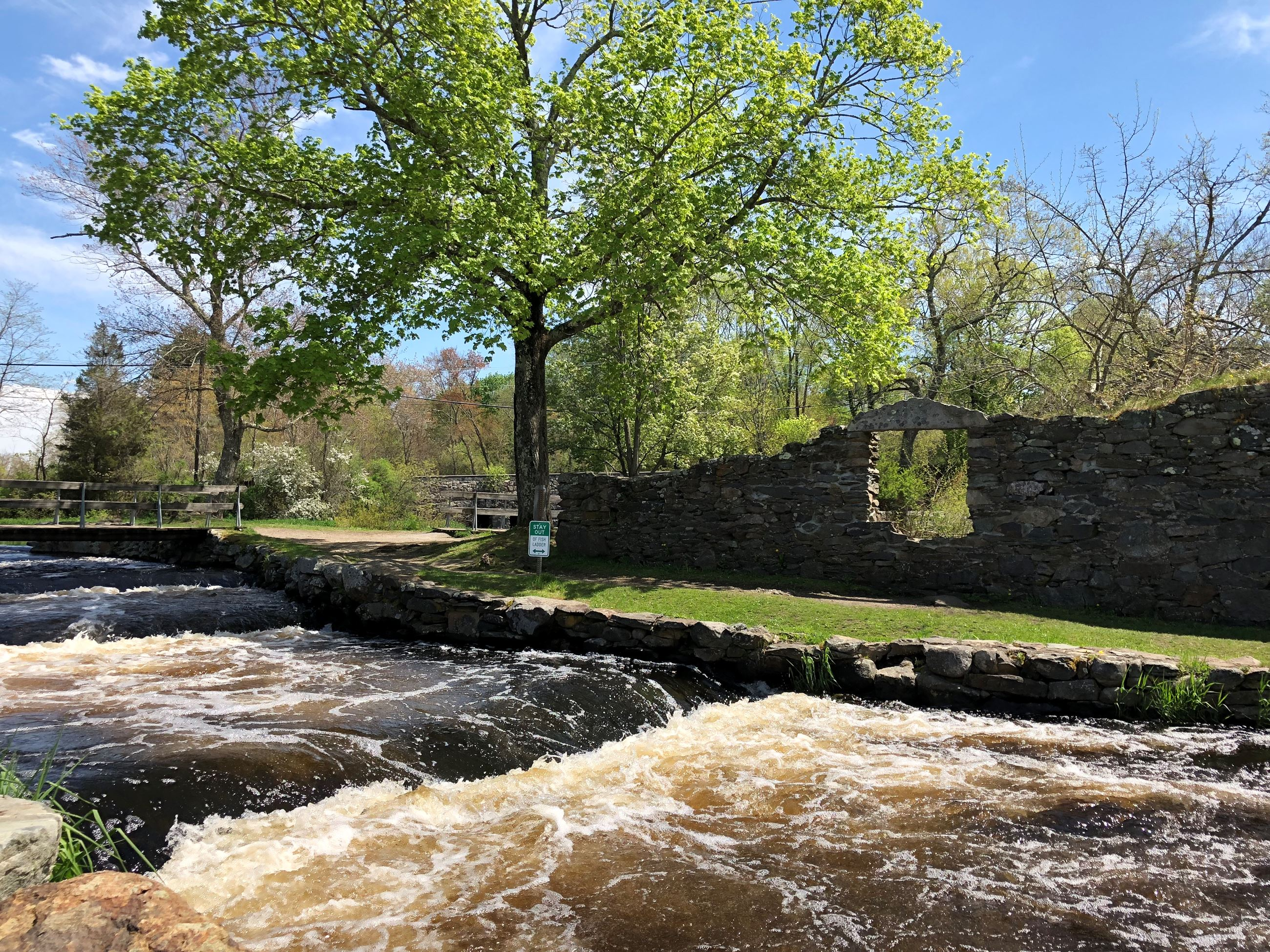 herring run at Oliver Mill Park